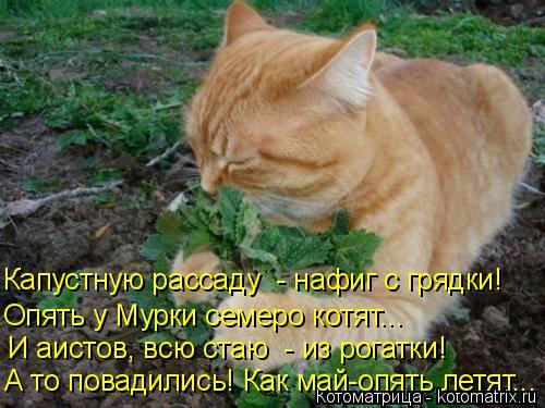 kotomatritsa_J (500x375, 205Kb)