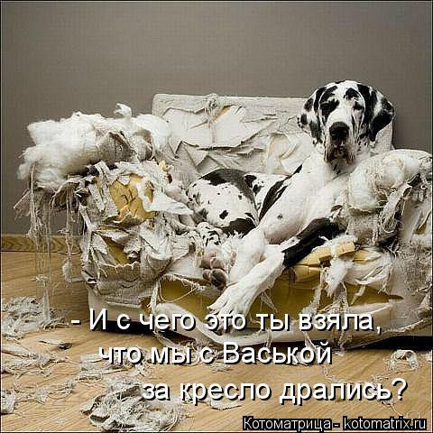 kotomatritsa_m (480x480, 205Kb)
