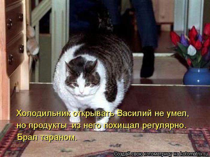 kotomatritsa_r (700x525, 264Kb)