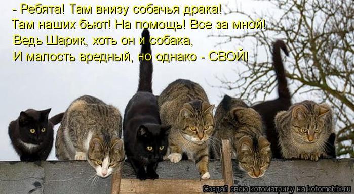 kotomatritsa_XL (700x384, 324Kb)