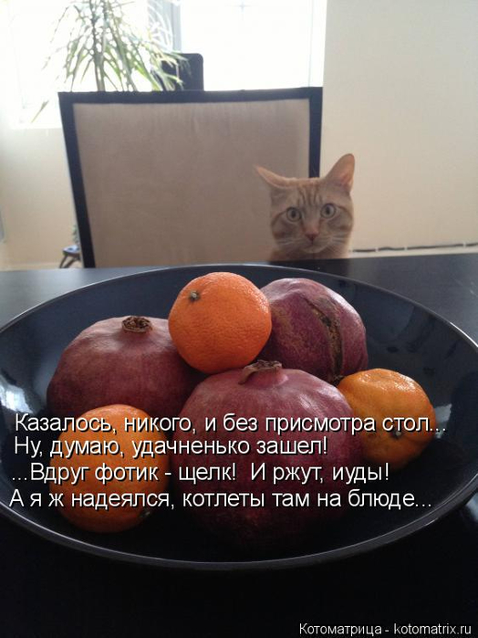 kotomatritsa_xt (524x700, 274Kb)