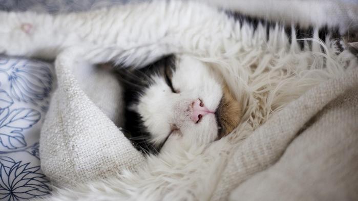 1366x768_cat-furry-sleep (700x393, 227Kb)