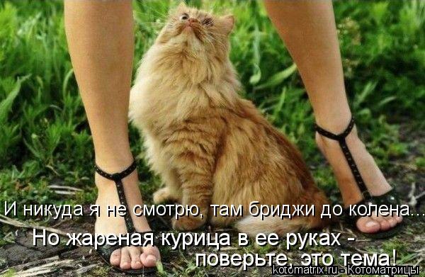 kotomatritsa_6n (600x391, 225Kb)