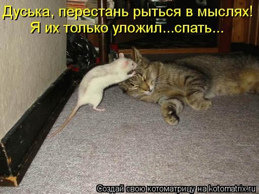 kotomatritsa_wM (511x382, 146Kb)