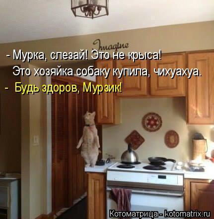 kotomatritsa_L (431x442, 135Kb)