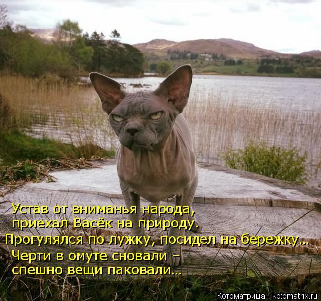 kotomatritsa_o3 (650x610, 312Kb)
