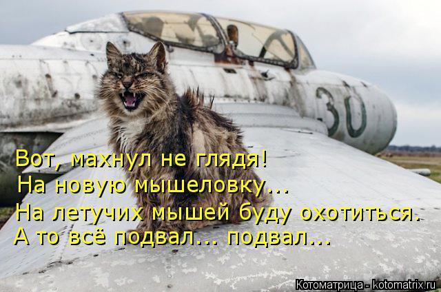 kotomatritsa_qq (640x424, 225Kb)