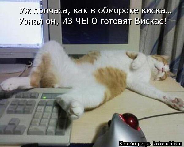 kotomatritsa_ra (600x480, 145Kb)