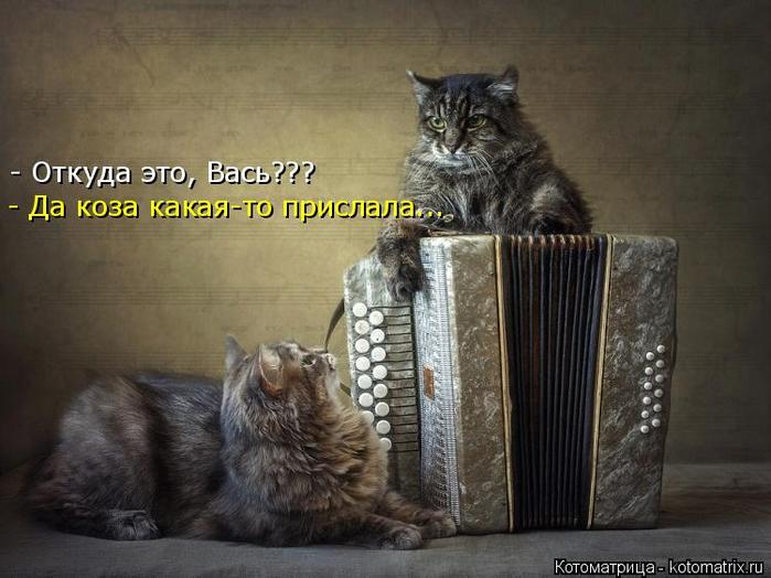 kotomatritsa_t (700x524, 299Kb)