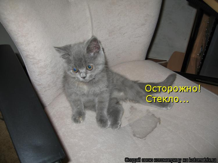 kotomatritsa_-u (700x524, 226Kb)