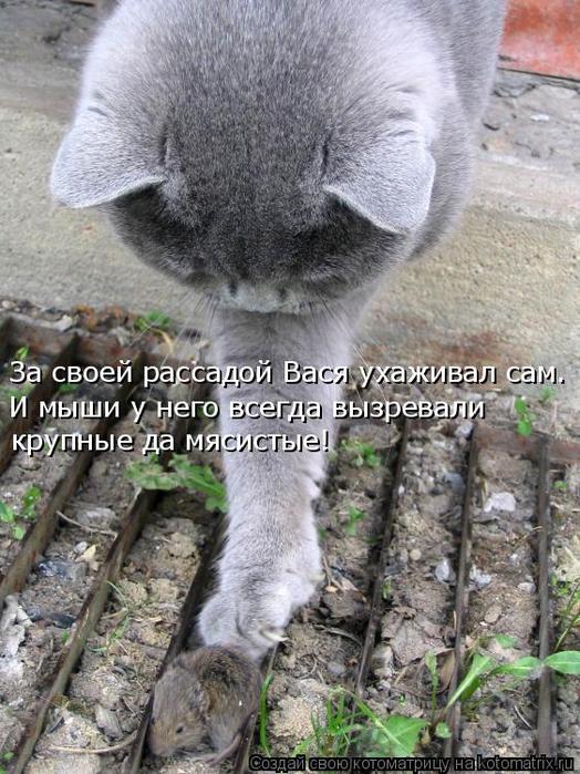 kotomatritsa_W (524x700, 407Kb)