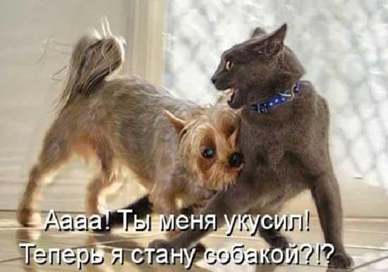 2714816_prokotovisobak06 (550x385, 23Kb)