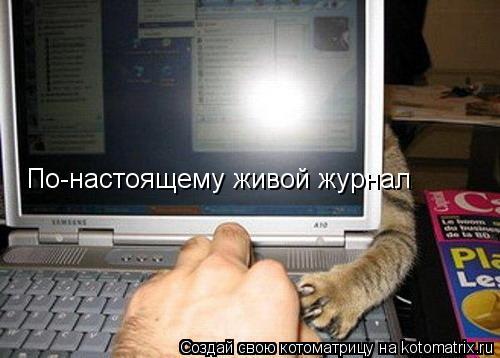 kotomatritsa_72 (500x358, 119Kb)