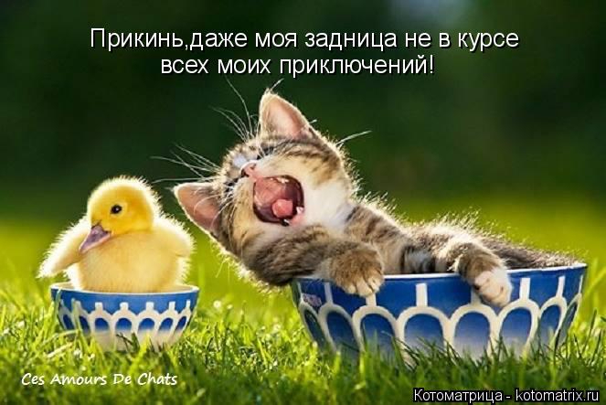 kotomatritsa_J (663x443, 211Kb)