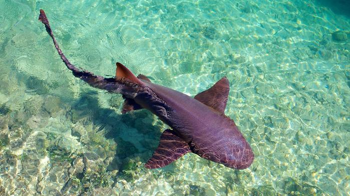 Dolphin-Cove-60457 (700x393, 437Kb)