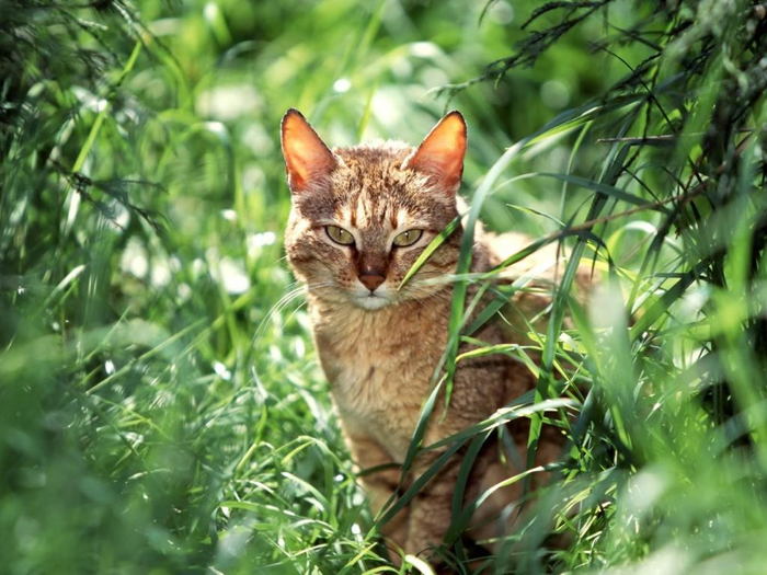 cat-grass-sit (700x525, 413Kb)