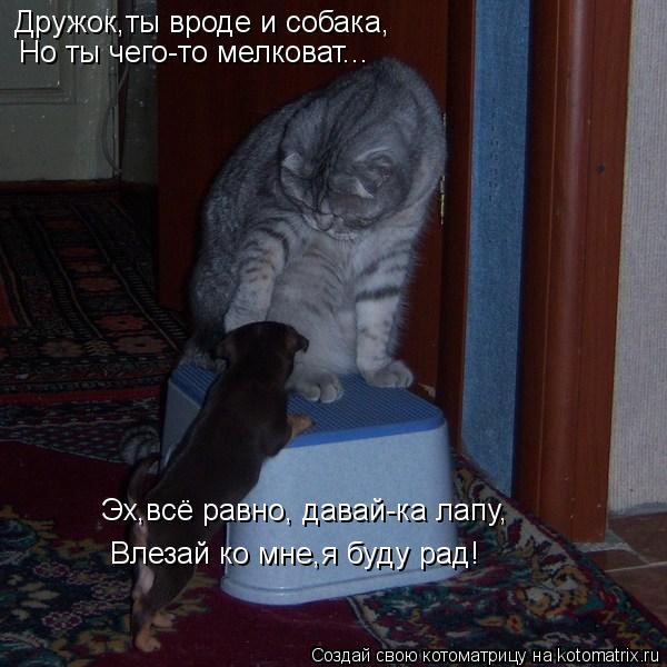 kotomatritsa_1c (600x600, 212Kb)