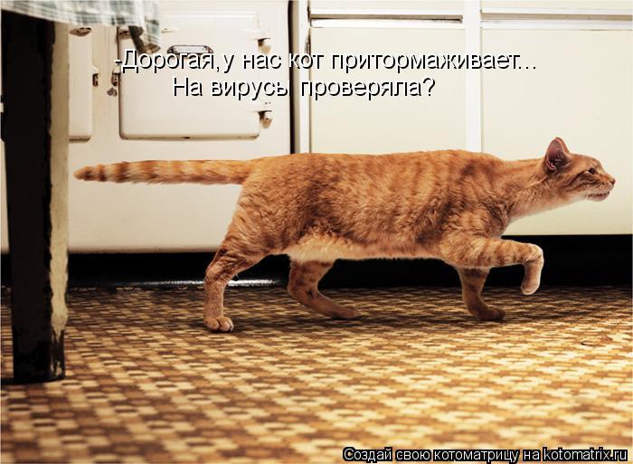 kotomatritsa_9Js (700x513, 259Kb)