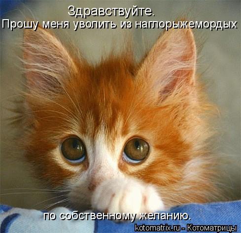 kotomatritsa_u3 (489x473, 171Kb)