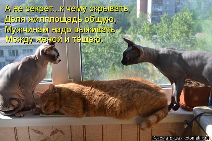 kotomatritsa__ (700x466, 365Kb)