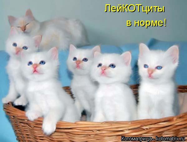 kotomatritsa_L (600x456, 144Kb)