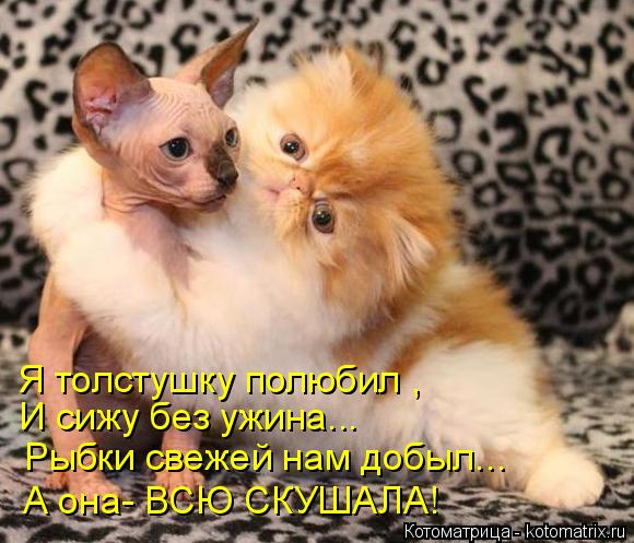 kotomatritsa_m (580x497, 255Kb)