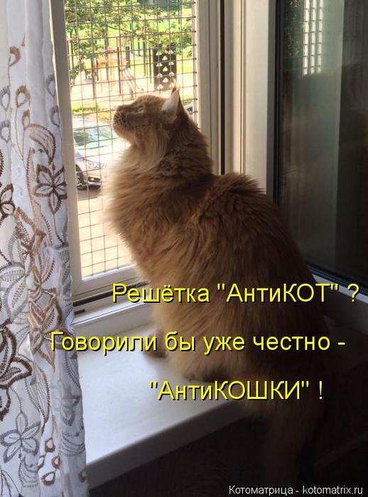 kotomatritsa_Ns (518x700, 343Kb)