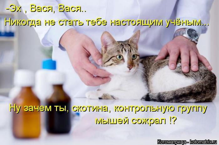 kotomatritsa_uw (700x465, 312Kb)