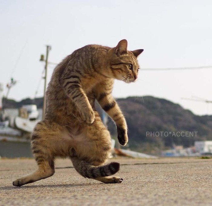 ninja_cats_hisakata_hiroyuki_003 (700x679, 90Kb)