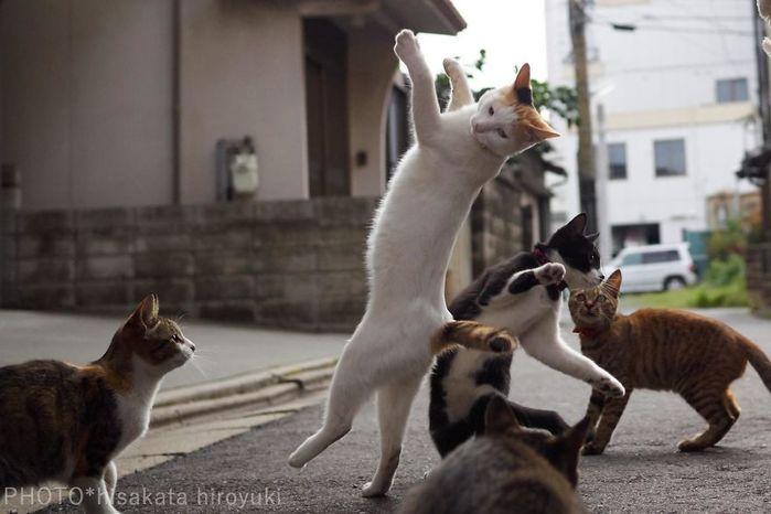 ninja-cats-photography-hisakata-hiroyuki-82-59f196f7572b0__880 (700x466, 44Kb)