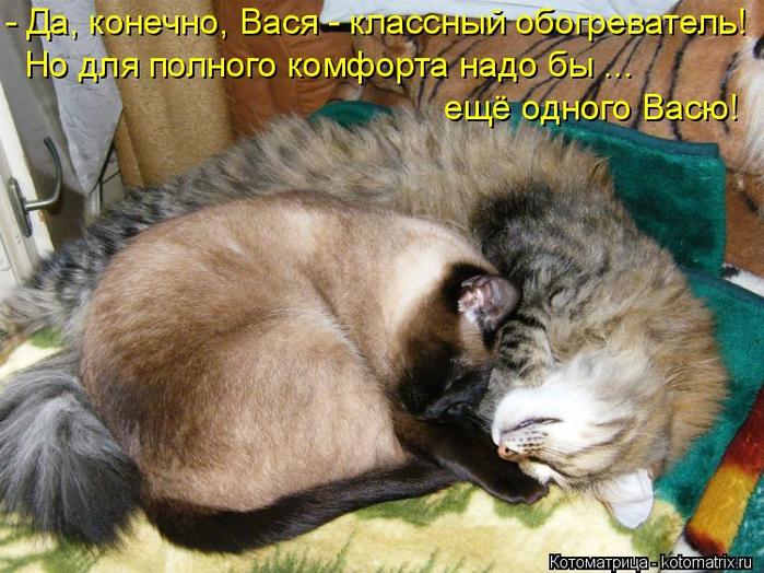 kotomatritsa_l (700x524, 447Kb)