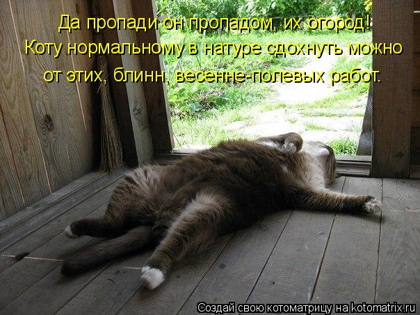 kotomatritsa_B (604x453, 260Kb)