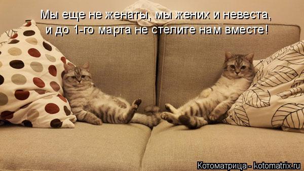 kotomatritsa_j8 (600x338, 158Kb)