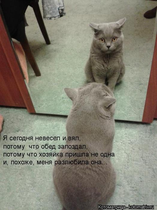 kotomatritsa_K0 (524x700, 289Kb)