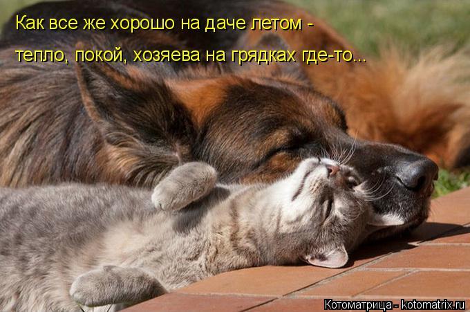 kotomatritsa_l (680x451, 236Kb)