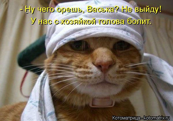 kotomatritsa_nE (600x419, 195Kb)