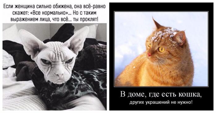Prikoly_Vse_normalno_18_29074947 (700x367, 196Kb)