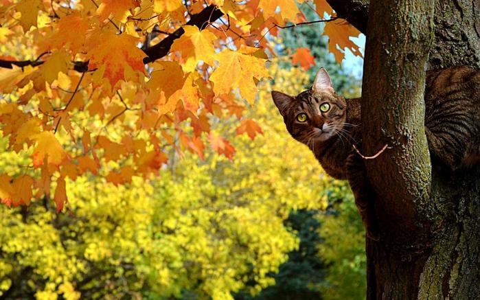 cat-fall-tree (700x437, 436Kb)