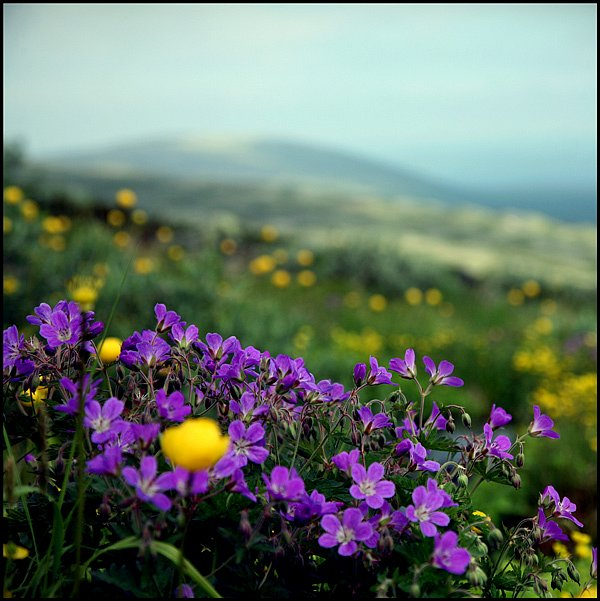 Красив цветок пока не сорван.... - Страница 6 912870433647185536