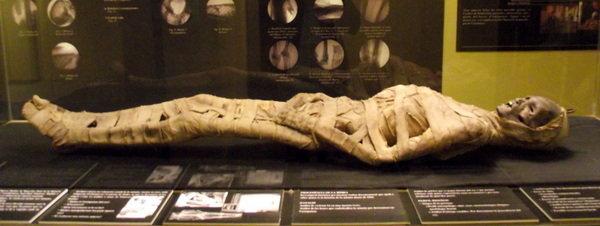 La momia del Museu Darder vuelve a Banyoles 10 años después La-momia-del-museo-Darder-de-B_54372600574_51351706917_600_226