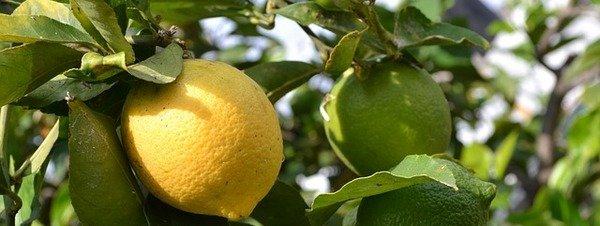 [HILO GENERAL] Ciencias Naturales - Página 7 Los-limones-actuan-como-un-des_54432058244_51351706917_600_226