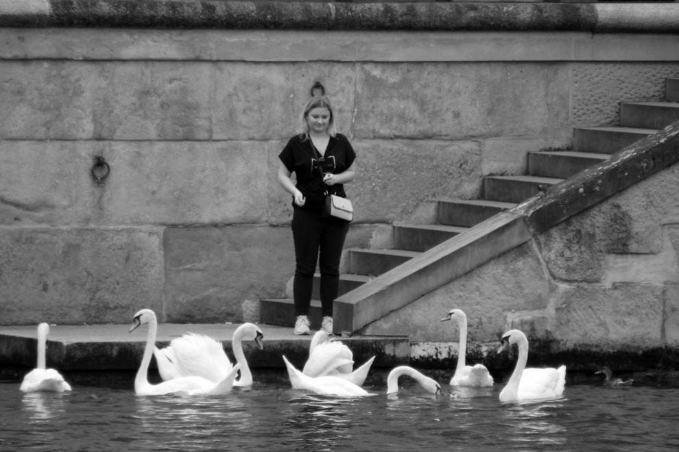 Švajcarska - Page 2 Switzerland--Zurich--Old-Town--Swans-black-white_54_990x660