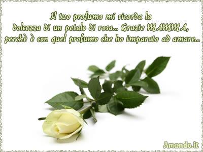 FESTA DELLA MAMMA 1208184051rosa-bianca