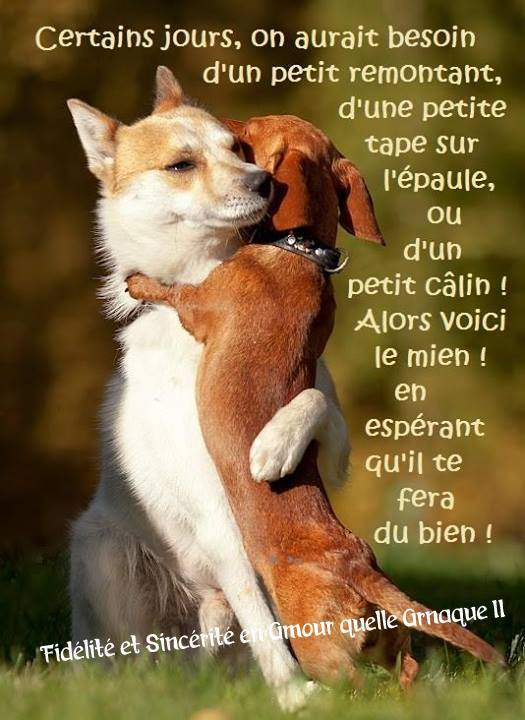 Insolite  animaux . - Page 5 Calins_027
