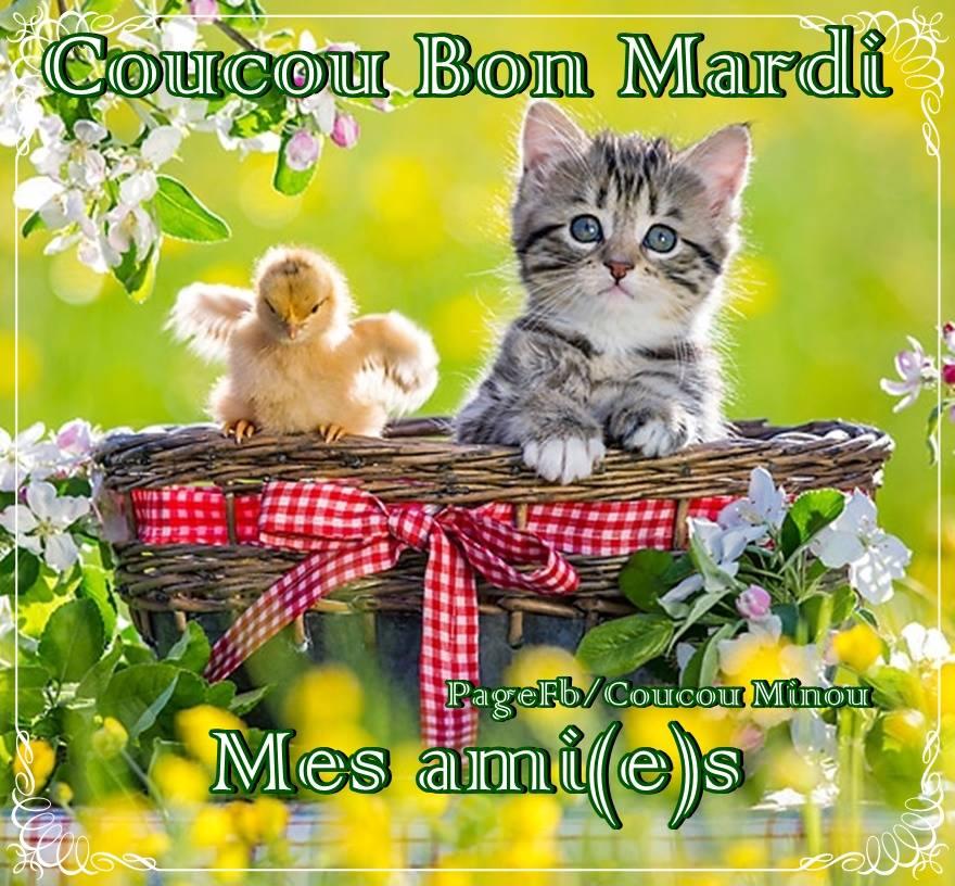 Pour se dire Bonjour - Page 3 Mardi_065