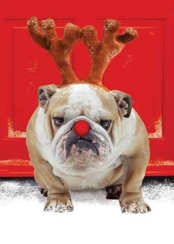 Frohe Weihnachten 043