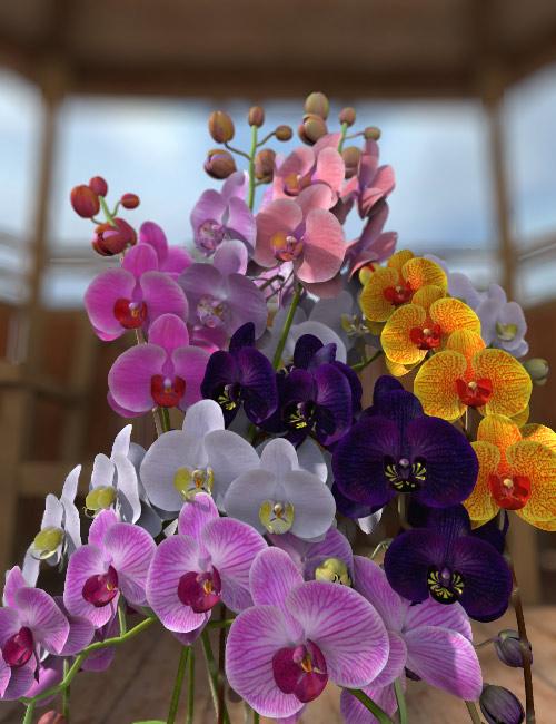 Lule dhe vetëm lule! 3bcc597e0b2de54b1ab60094658f38c4