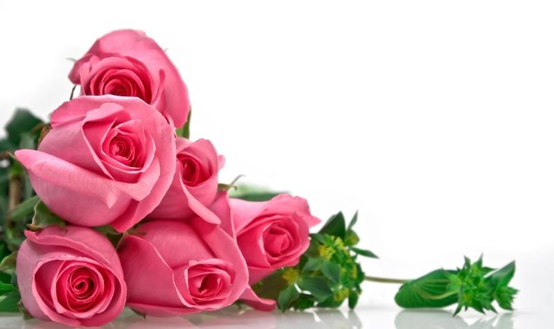 Lule dhe vetëm lule! C97f7ef1a25bab08e08b596a5ade2807