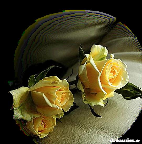 FOTO TË MUAJIT DHJETOR Fb1986770dfdd6f1ca32f58695ace92b