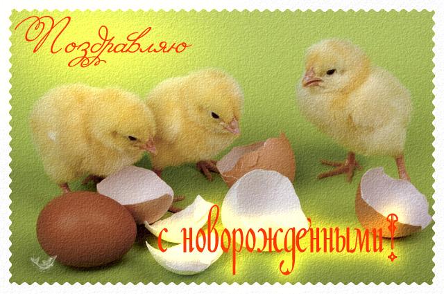 ВЕО Ферзь Кэттивэл (Украина) - Страница 2 23825203_inna455266